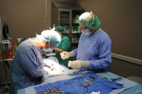 A surgical team at Veterinary Specialty Center in Buffalo Grove removes fat from Doodle, a 9-year-old German Shepherd suffering from osteoarthritis and hip dysplasia. Stem cells will be derived from the fat and injected into the dog./Photo submitted by Veterinary Specialty Center