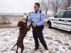 Bo plays with Officer Robert Badertscher outside the K-9 training facility in Joliet.  (Mary Owen/Tribune)