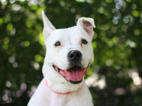 Dog of the Week at Naperville Area Humane Society