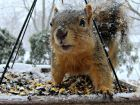 A squirrel guards his seeds in a DuPage County backyard. Photo submitted by Debbie Dolecki.